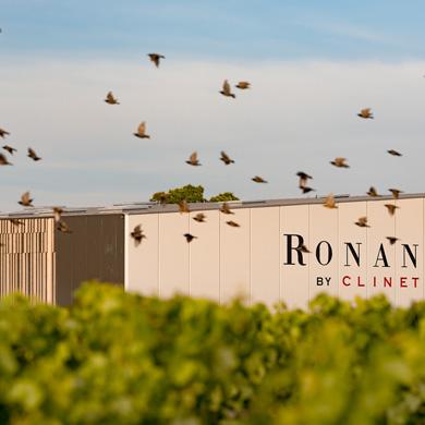 Ronan by Clinet