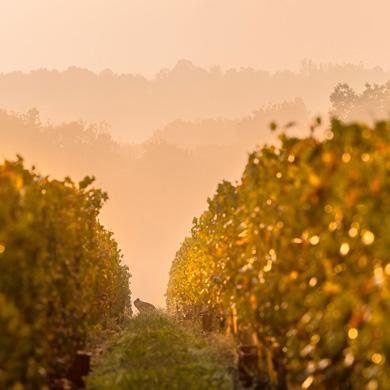 Vignobles et châteaux